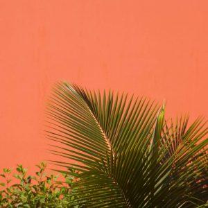 Living Coral: Pantone's winner for 2019