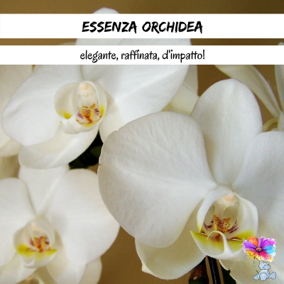 Essenza Orchidea