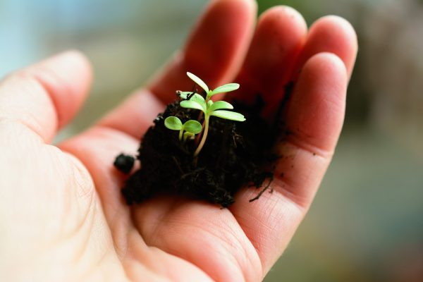 Il giardinaggio allunga la vita