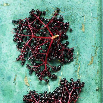 Eating elderberries may help minimise flu symptoms