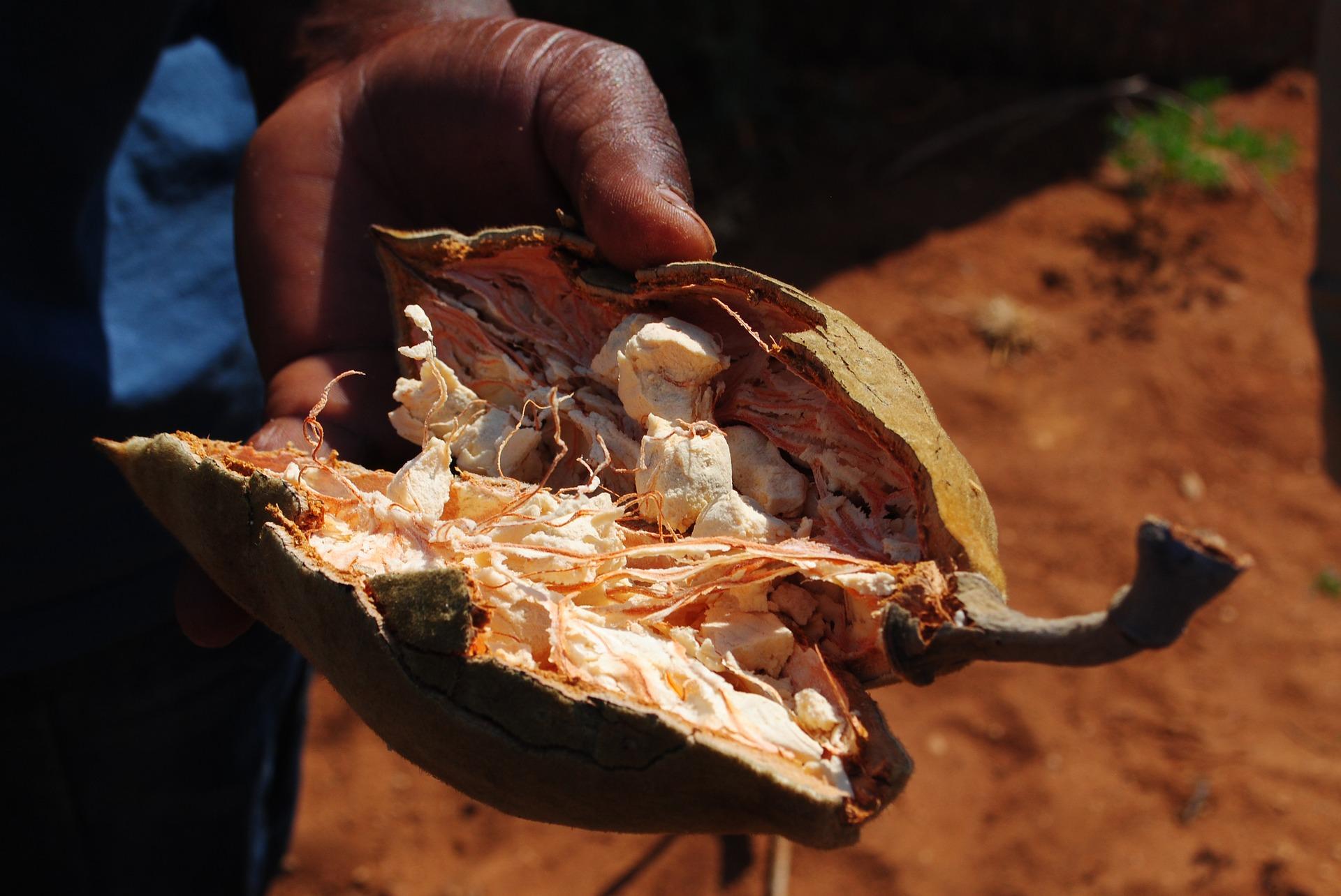 Baobab: il frutto delle meraviglie